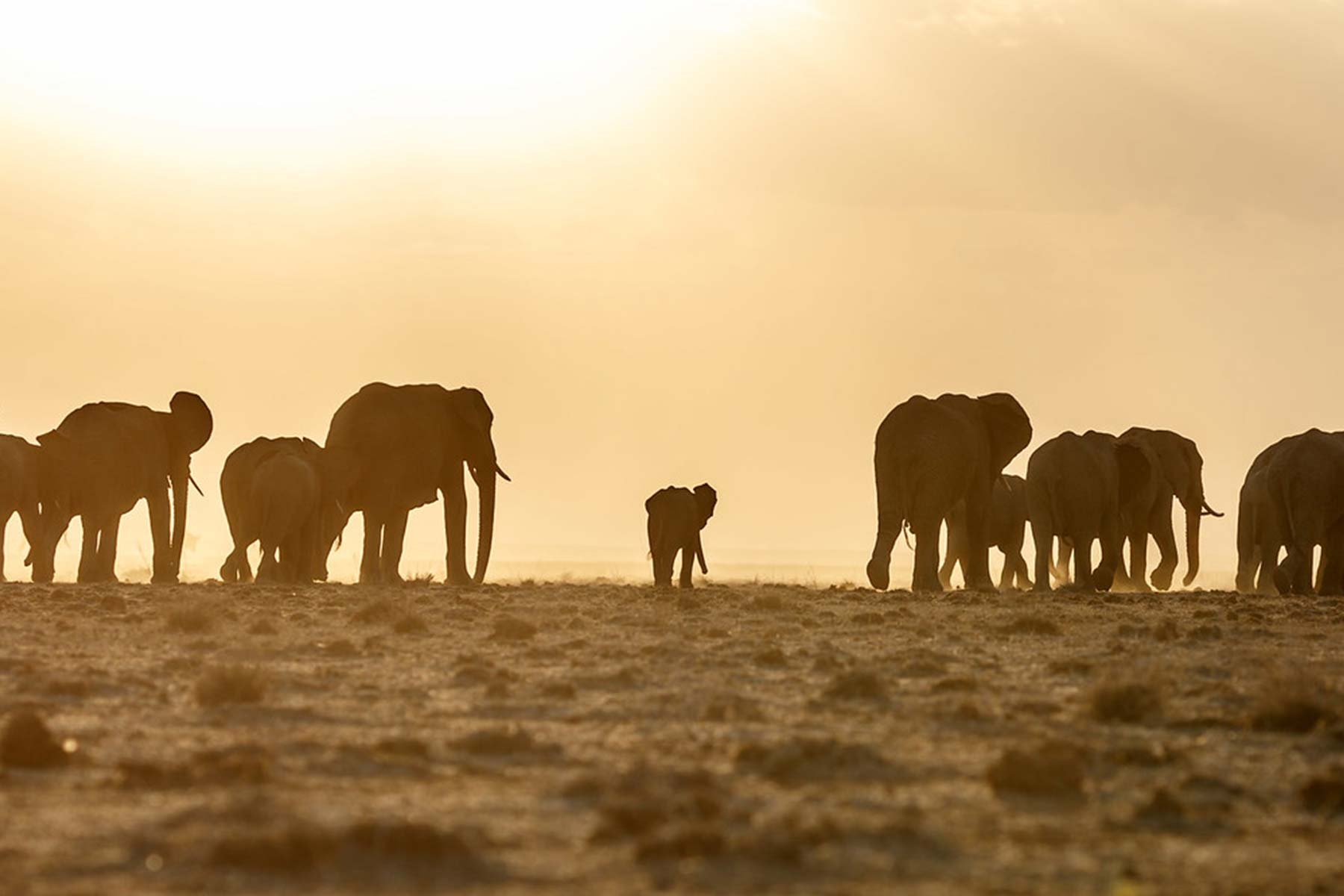 7 Day Highlights of Kenya & Tanzania Safari