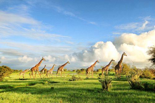 14 Days African Savanna Experience Safari (Kenya, Tanzania & Uganda)