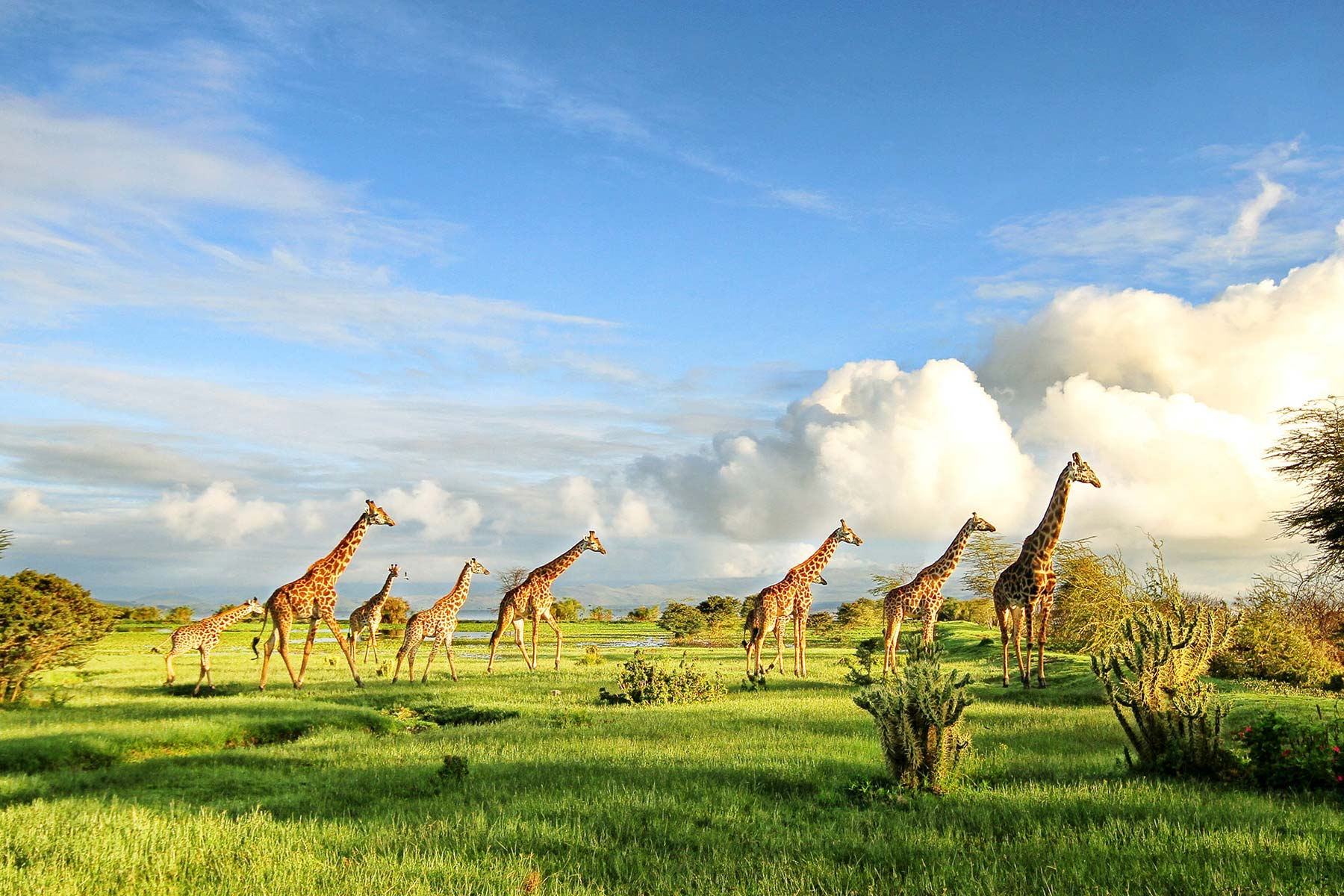 African Savanna Experience Safari (East Africa safaris)