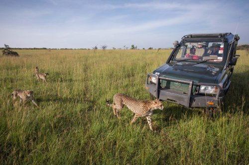 Africa Safari in Masai Mara - east africa safaris