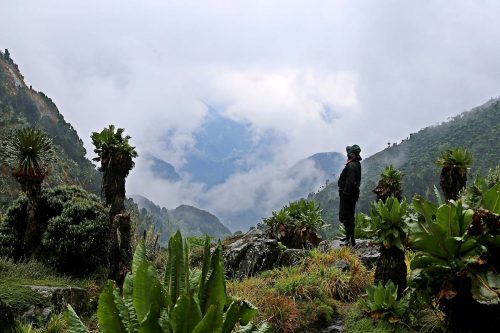 6 Day Wildlife & Rwenzori Mountains Challenge
